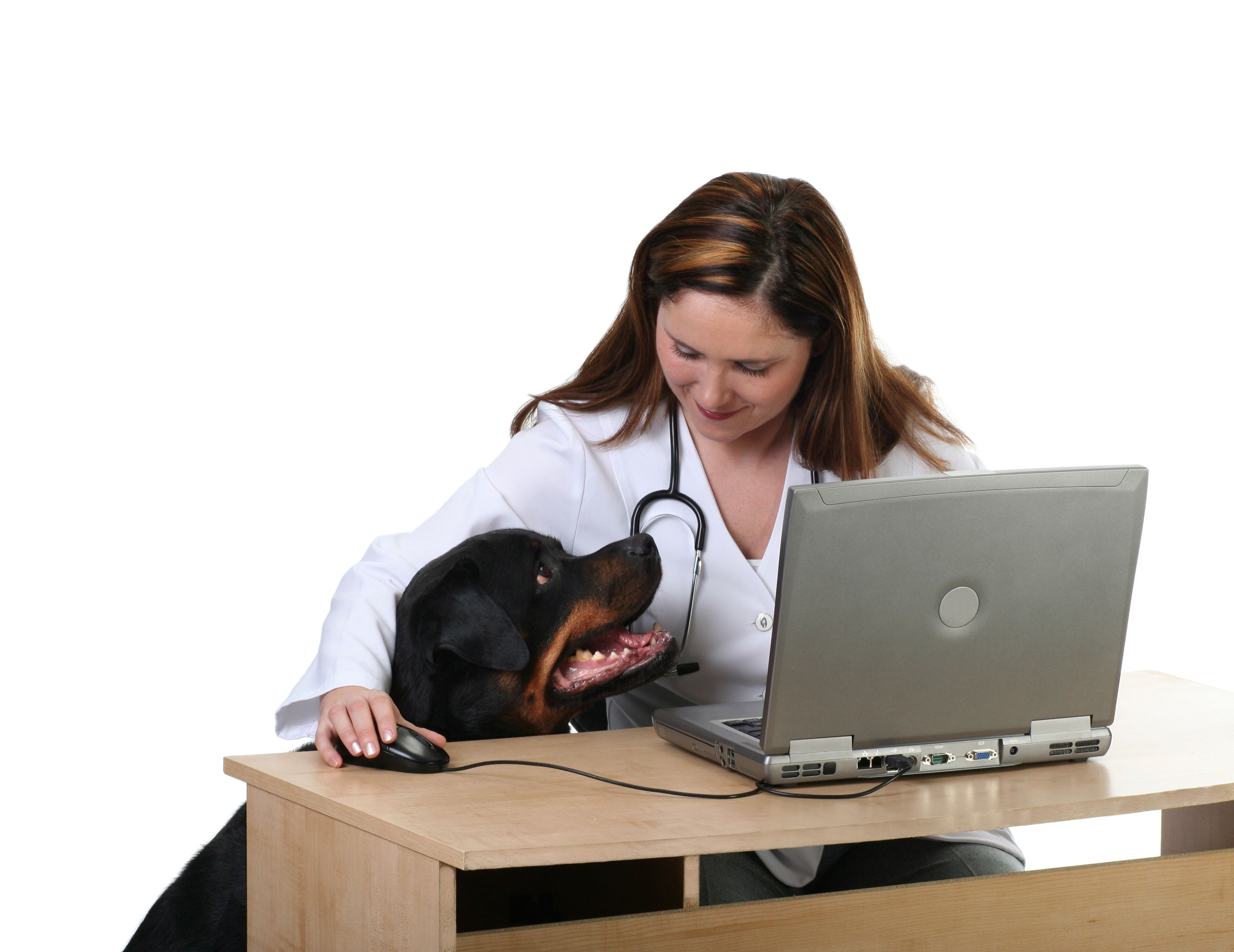 Here S Why You Should Have A Veterinary Blog Dog Training Near Me Dog Obedience Classes Dog Breeds