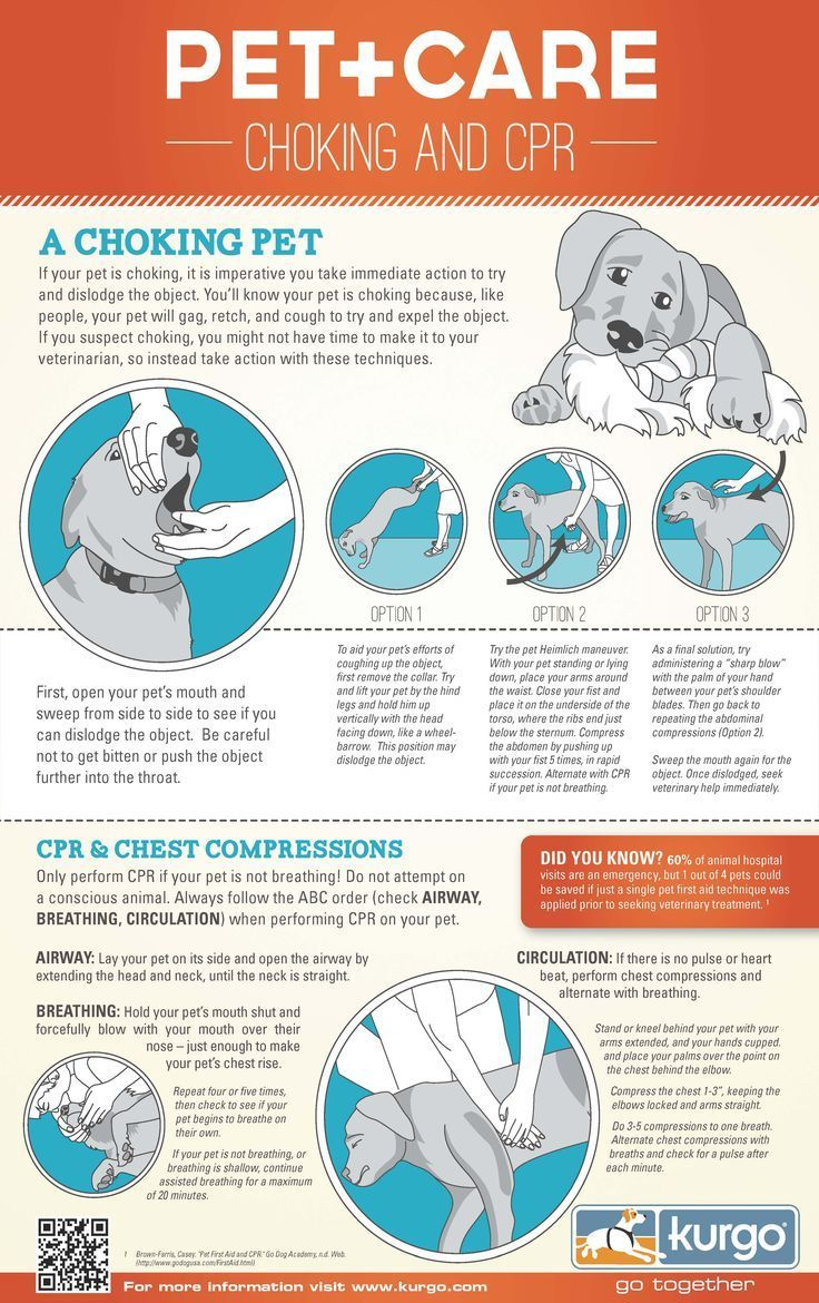 Be Prepared Pet Choking and CPR Infographic Pets, Dog