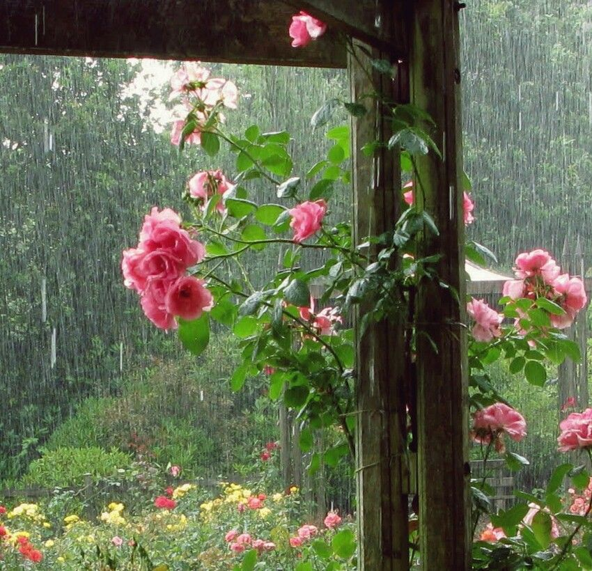 Raindrops Falling On Flowers Wallpaper Rain And Flowers ♡pluviophiles Unite♡ Pinterest Rain