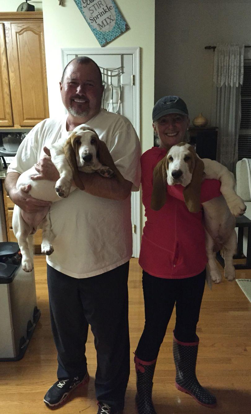 4 months Puppies, Dogs, Animals