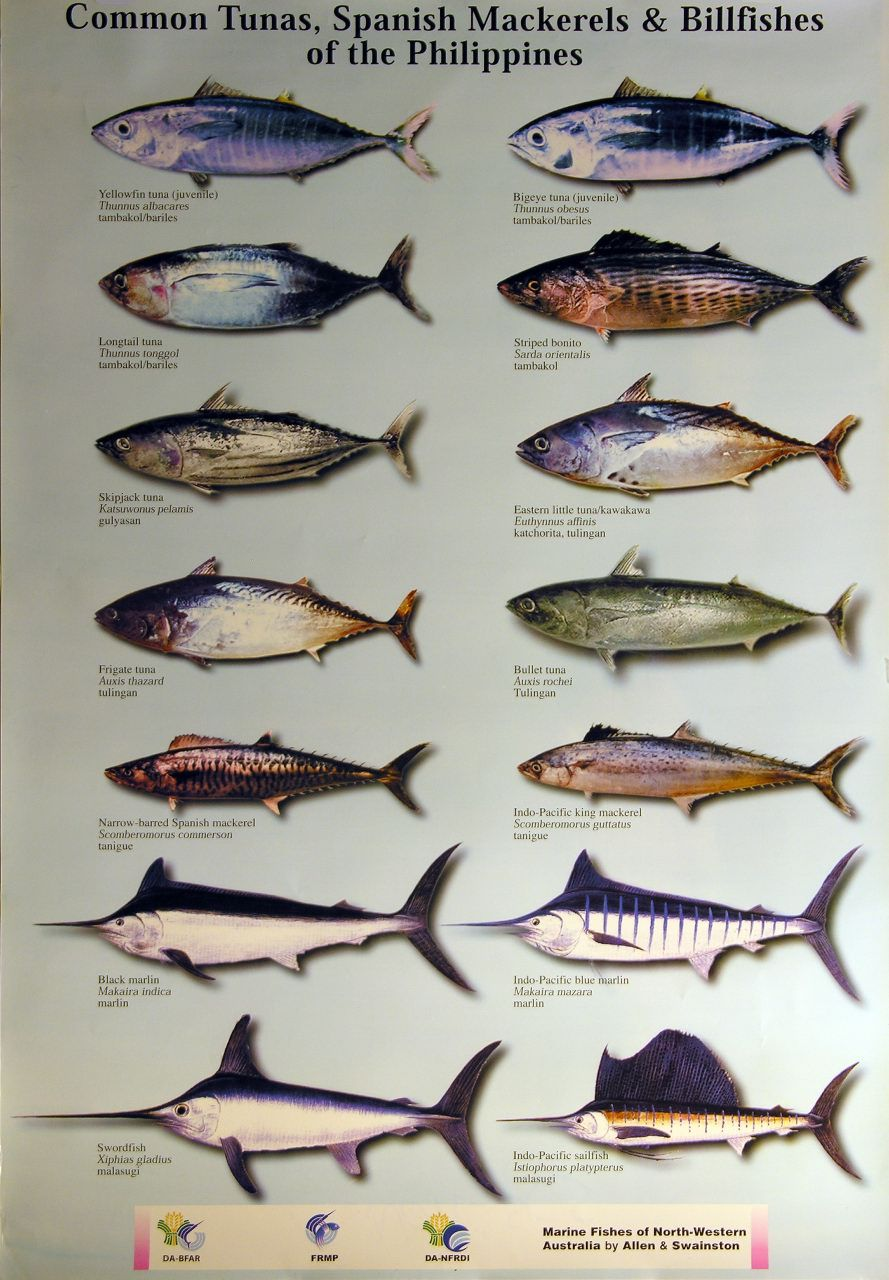 Http Www Unepscs Org Images Posters Large Pelagic Fish Species Of The Philippines Jpg Pelagic Fish Fish Chart Species