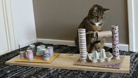 Photo of Make your own cat toy: fantastic ideas for cat lovers – house decoration more