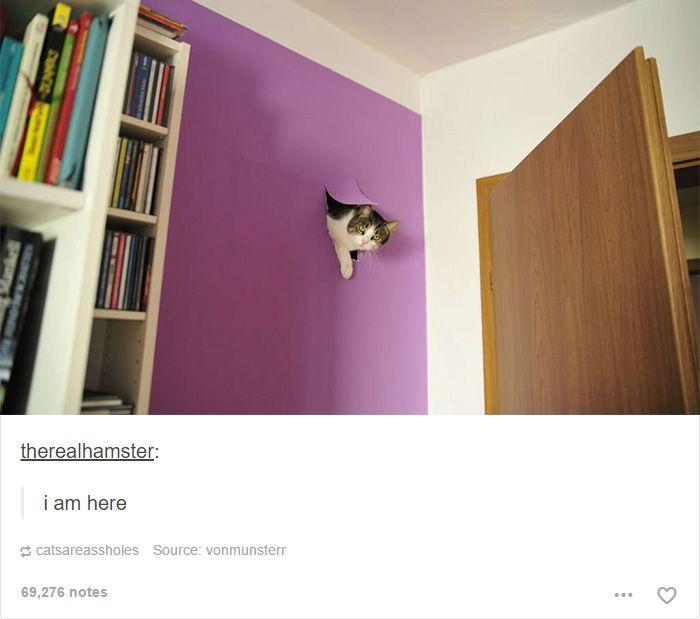 Le 46 chats les plus drôles d'Internet !
