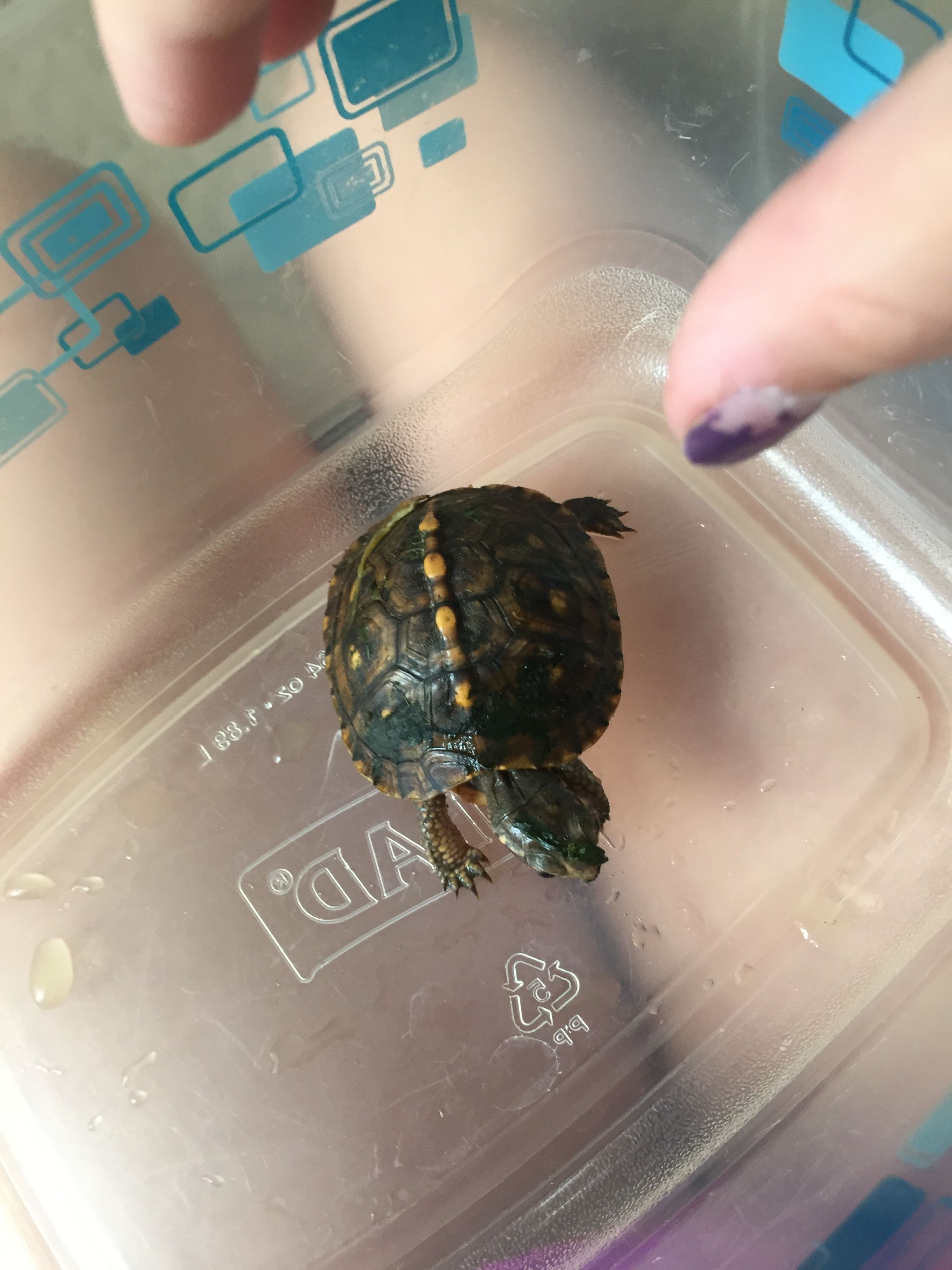 This was pet turtle Maybell the turtle I had to to let him her go