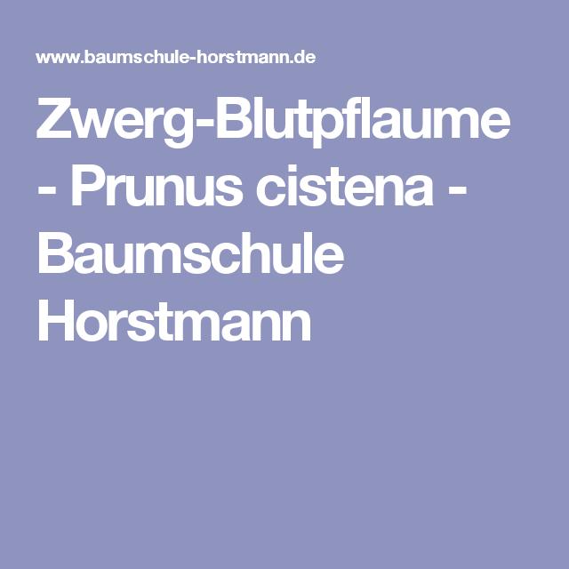Baumschule Horstmann zwerg blutpflaume prunus cistena baumschule horstmann garten