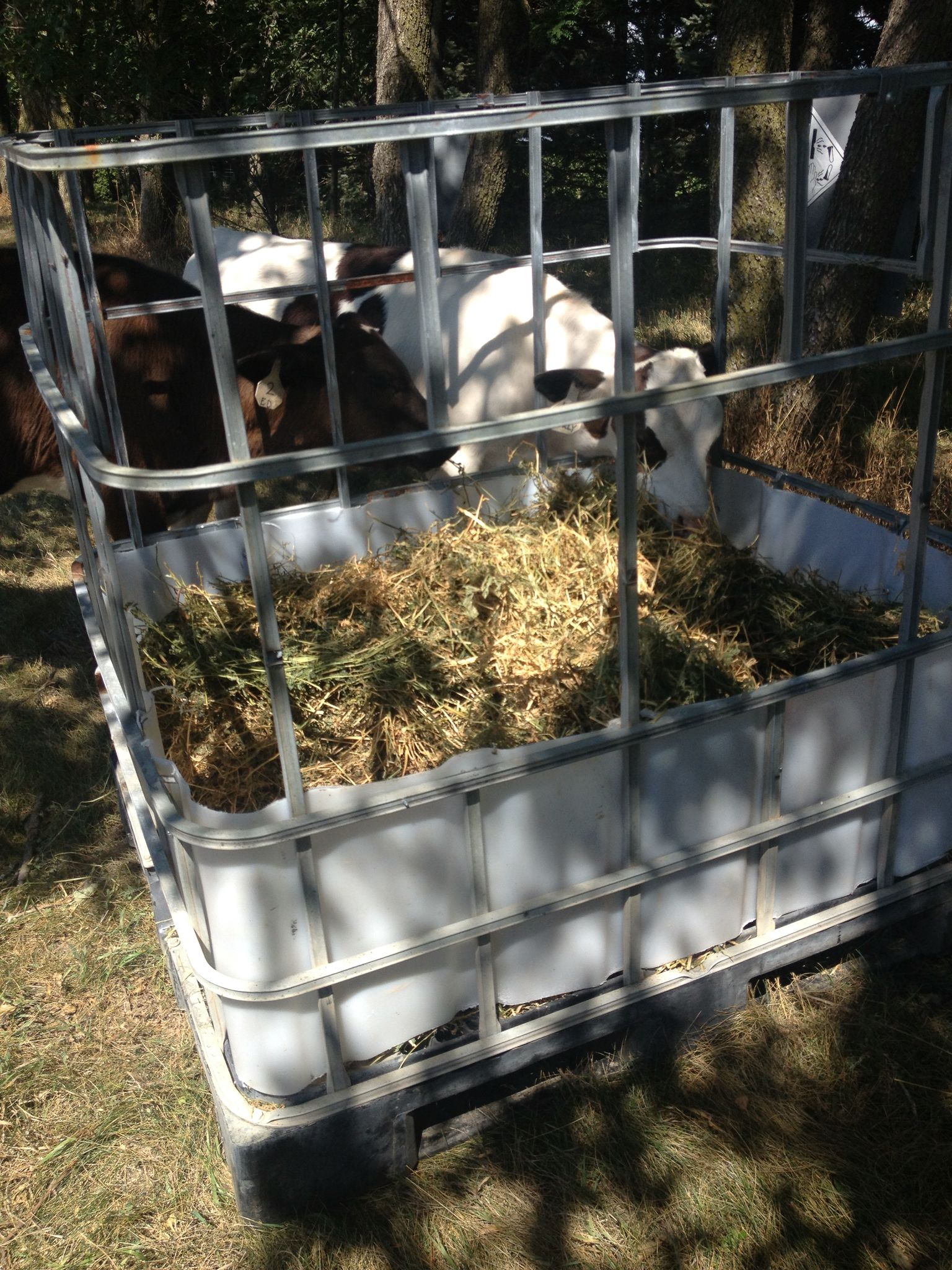 with feeders tray hay goat sale put the homemade for higher goats rack up i feeder would