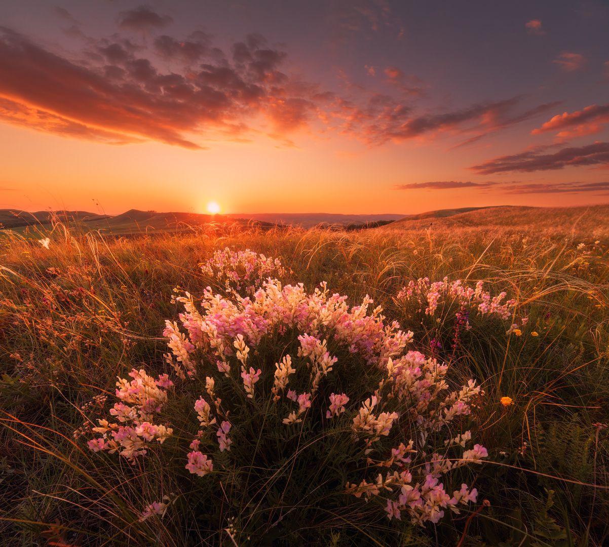 самом деле, фото цветов на восходе аппарат выполнен