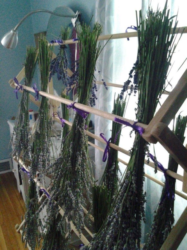 The Lavender Harvest - The Fraudulent Farmgirl