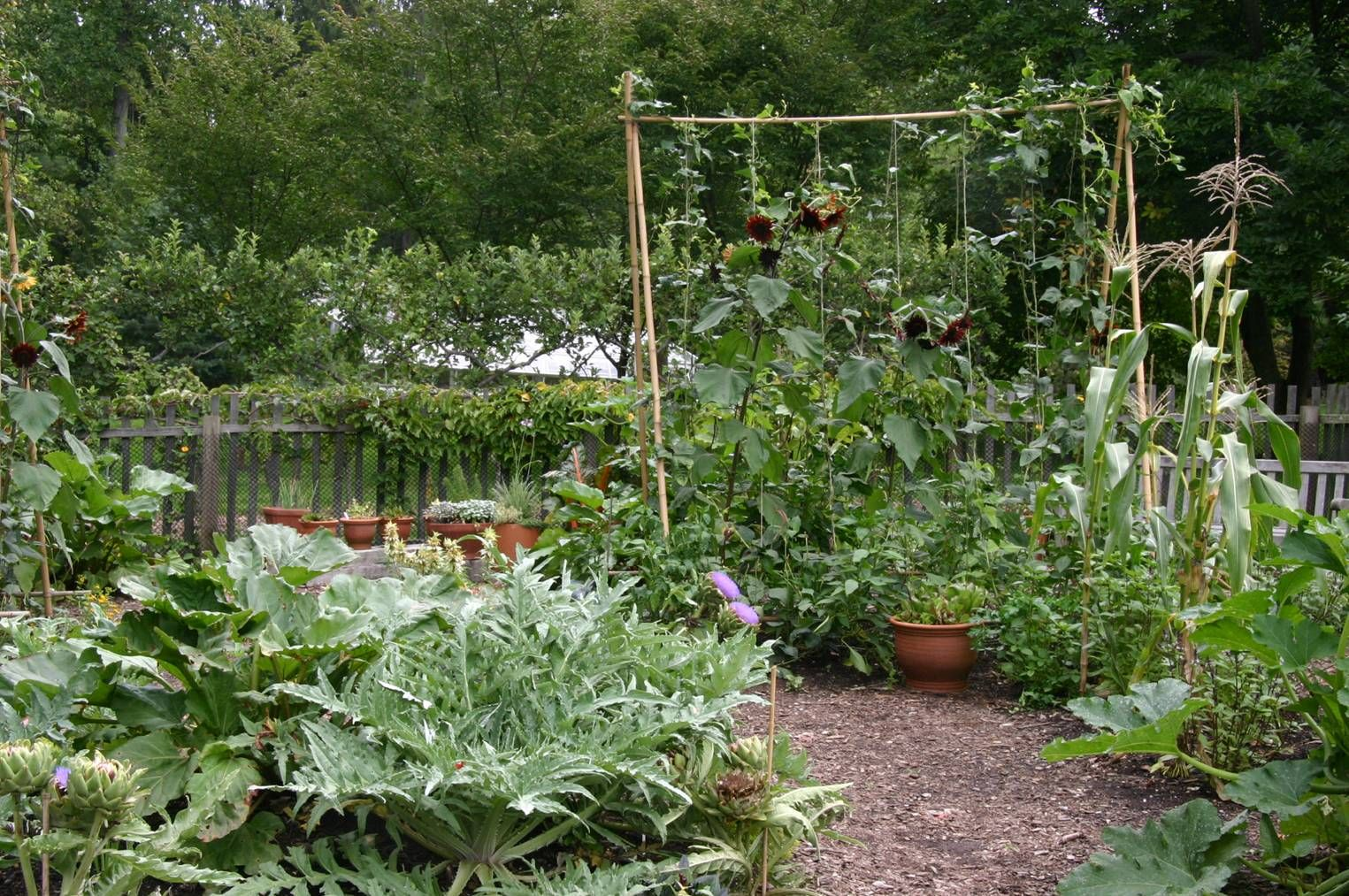 images about Potager Garden Project on Pinterest Gardens