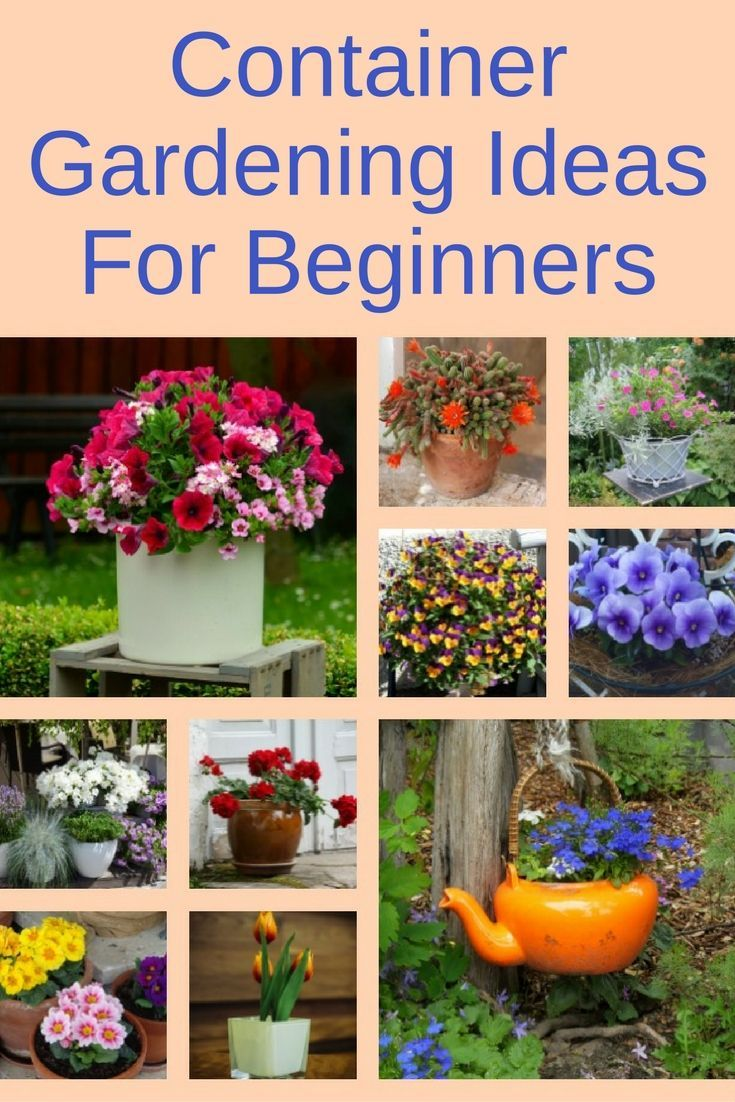 Container Gardening Ideas For Beginners | Container herb ...