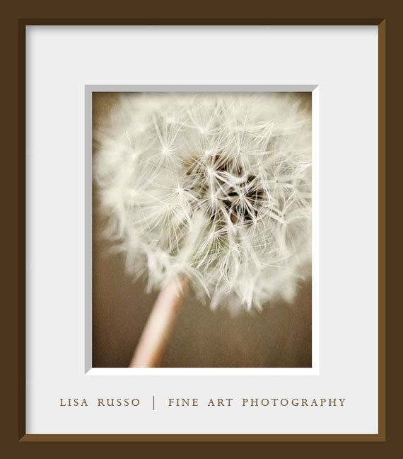 Framed Photographic Print Dandelion Flower Picture Wall Art Neutral