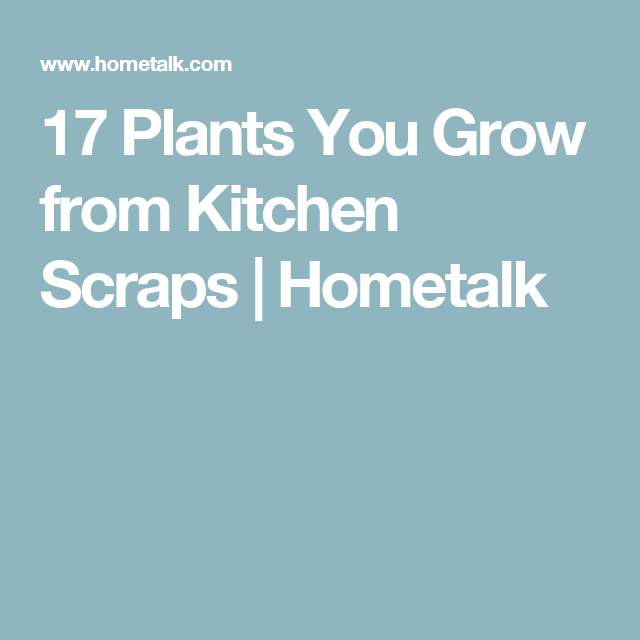 17 Plants You Grow from Kitchen Scraps | Hometalk