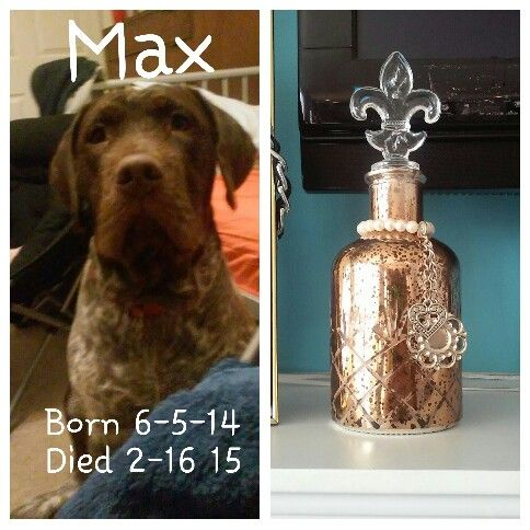 my baby max rip we love you max