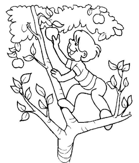 The Child Apple Picking On The Apple Tree Coloring Page