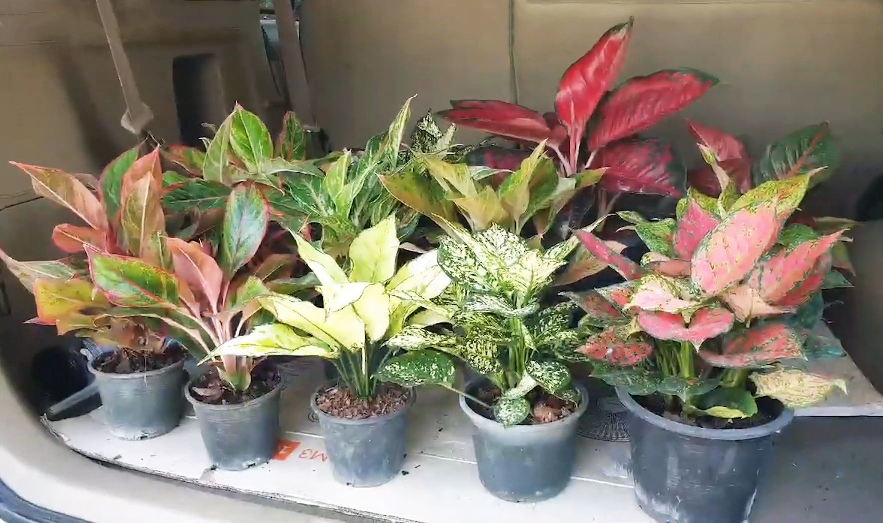 Pin Di Indoor Plants