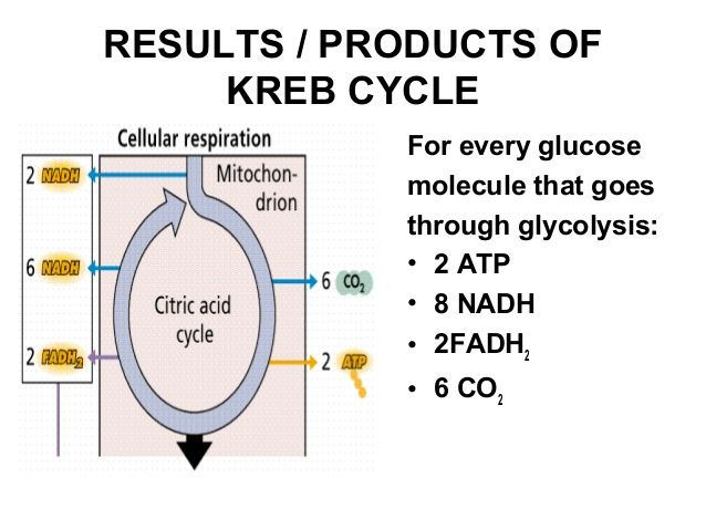 cycle krebs citric acid end step molecules intermediate enter