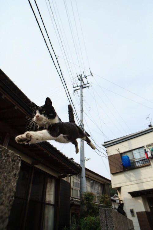 かわいい猫ちゃん画像館 on Twitter