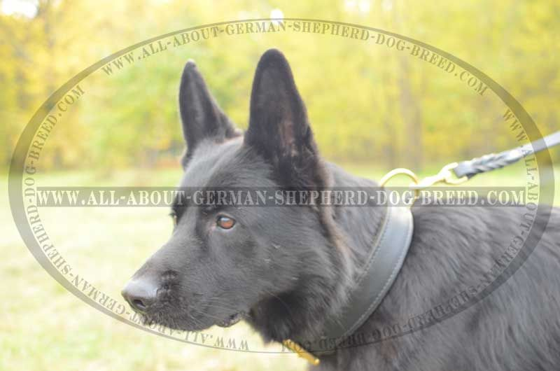 Luxury Extra Strong 2 Ply Leather Training Collar 29 90 Www