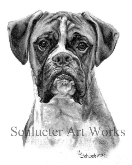 Watercolor Piaintings Of Boxers Google Search With Images Boxer Dogs Art Dog Sketch Boxer Dogs
