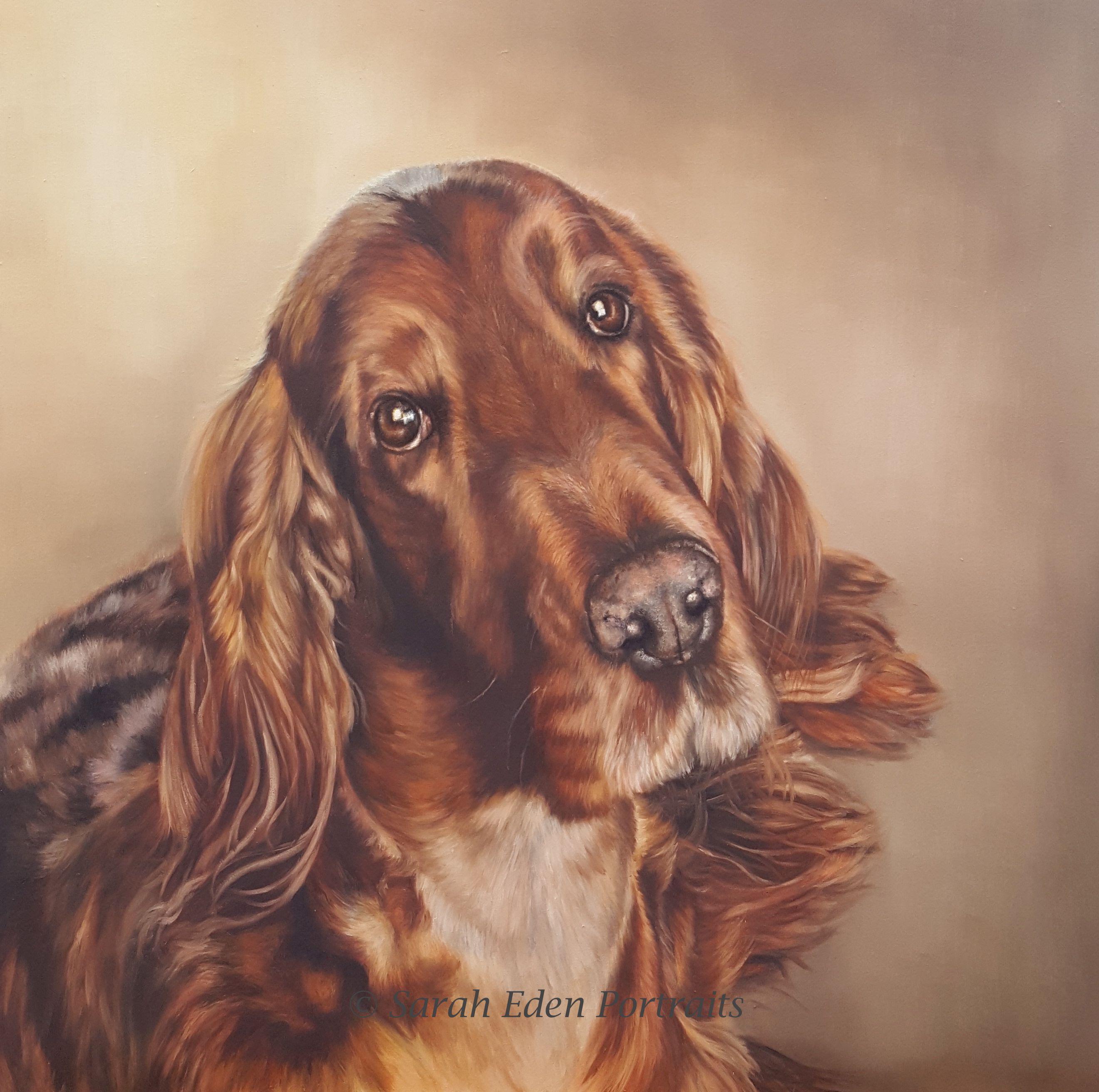Irish Setter portrait by Sarah Eden oilportrait
