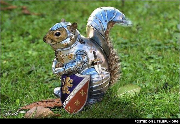 Squirrel in armor. Shit just got real.