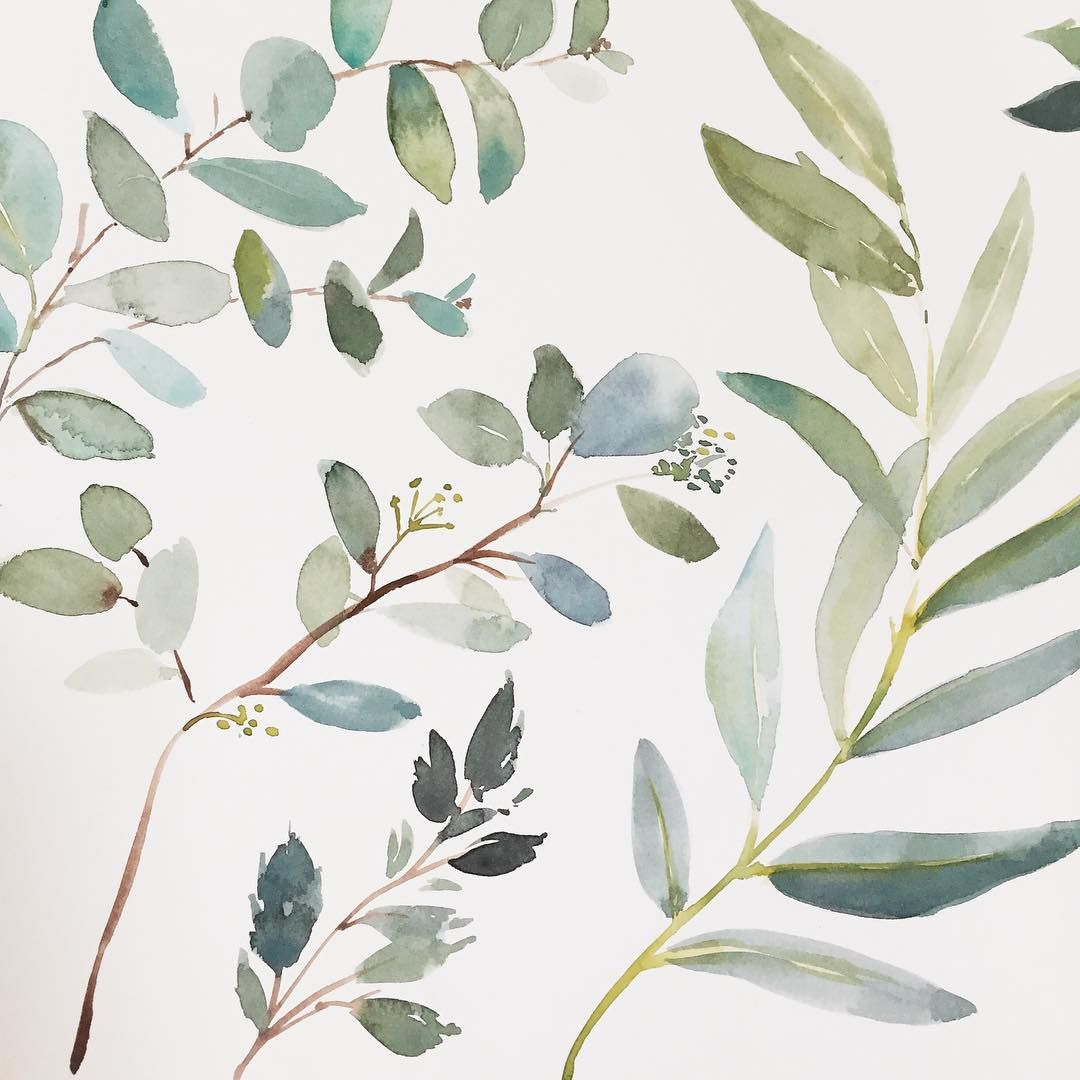 I Just Love The Colour Of Eucalyptus Leaves Don T You