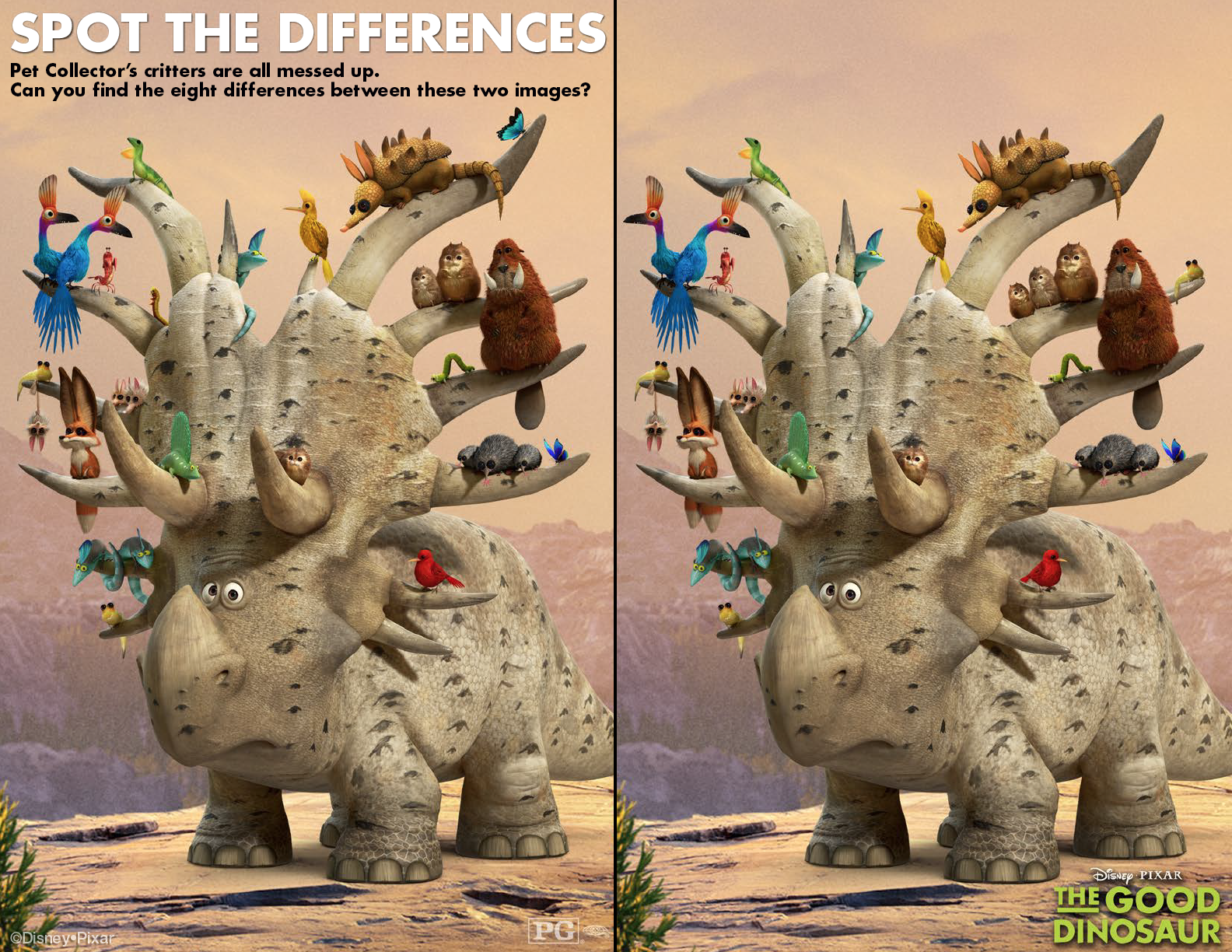 Spot The Pet Collector S Differences And See The Good