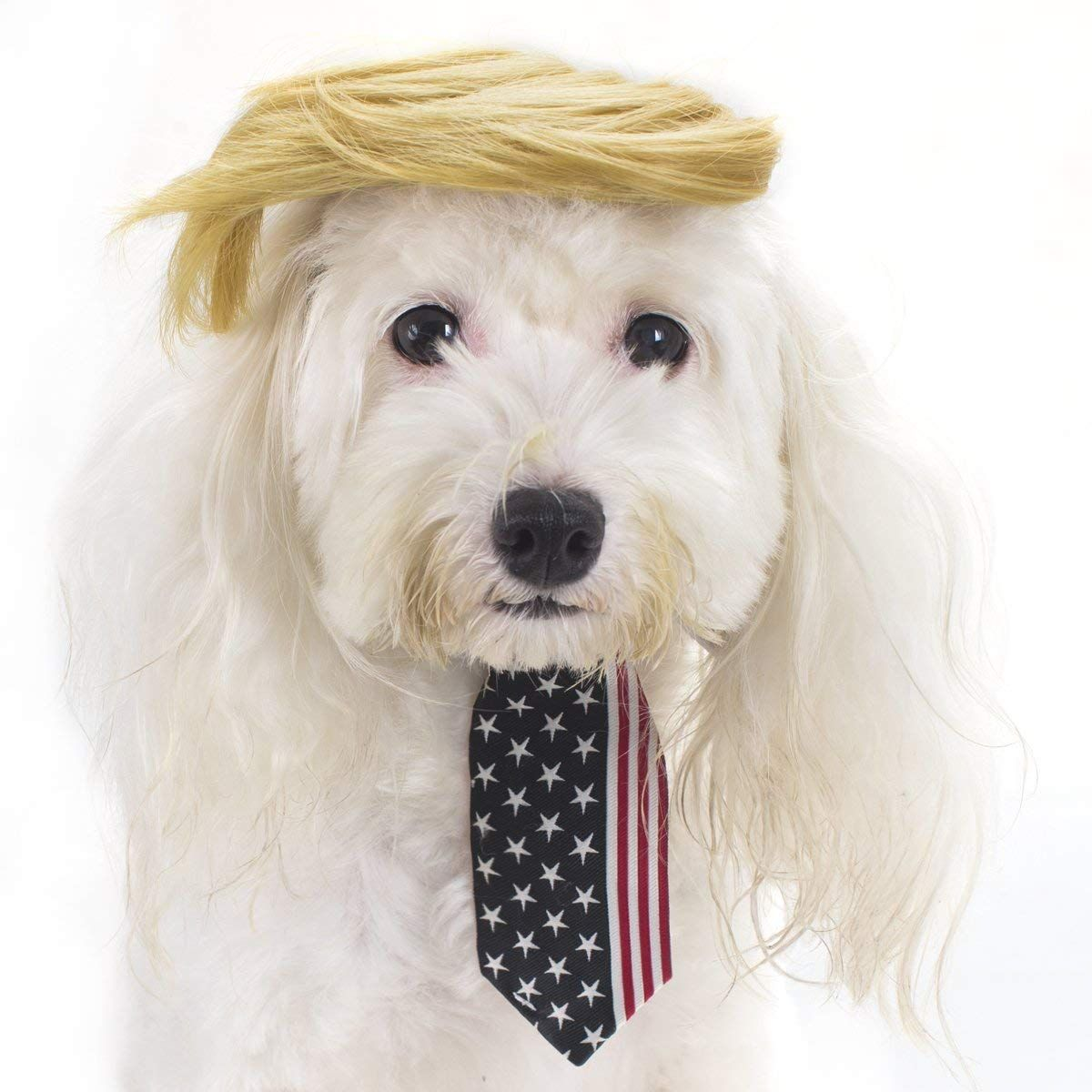 Amazon Com Fomate Dog And Puppy President Costume With Hair