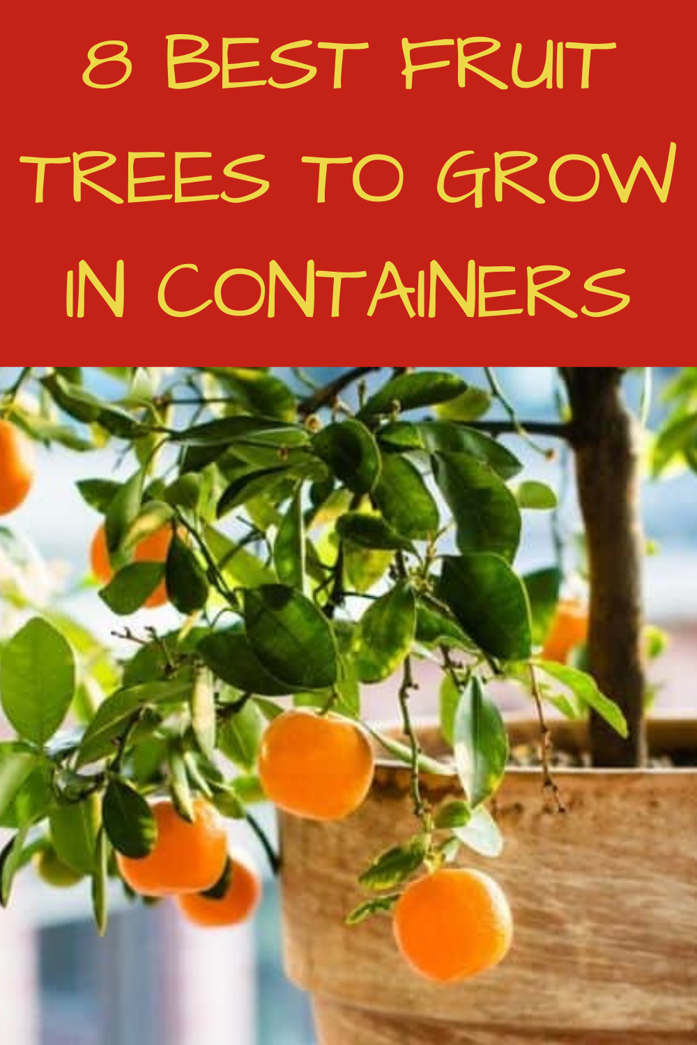 8 Best Fruit Trees To Grow In Containers Gardening Sun Fruit Trees Container Gardening Best Fruits