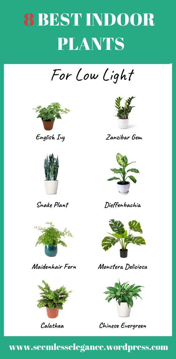 8 Best Indoor Plants For Low Light Low Light Plants Best Indoor Plants Low Light House Plants