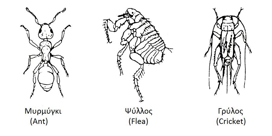 entomaspititrap2.png (900×450) Έντομα