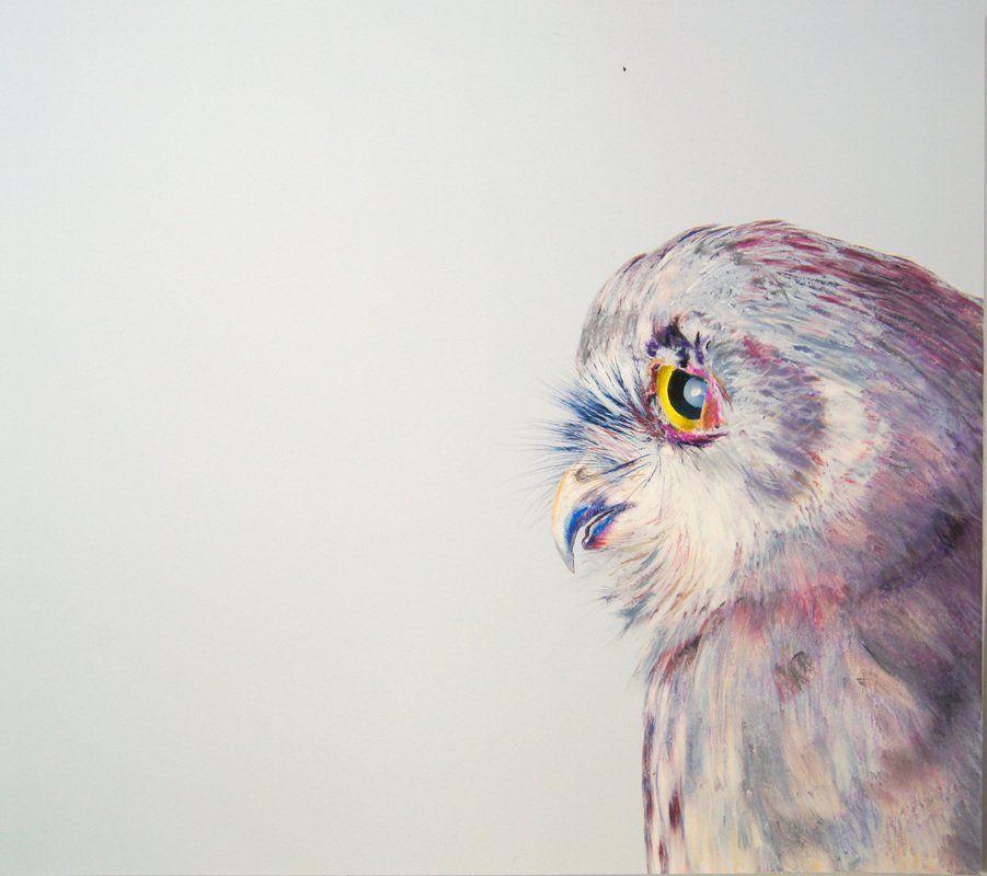 realistic owl portraits by john pusateri art illustration drawings nature