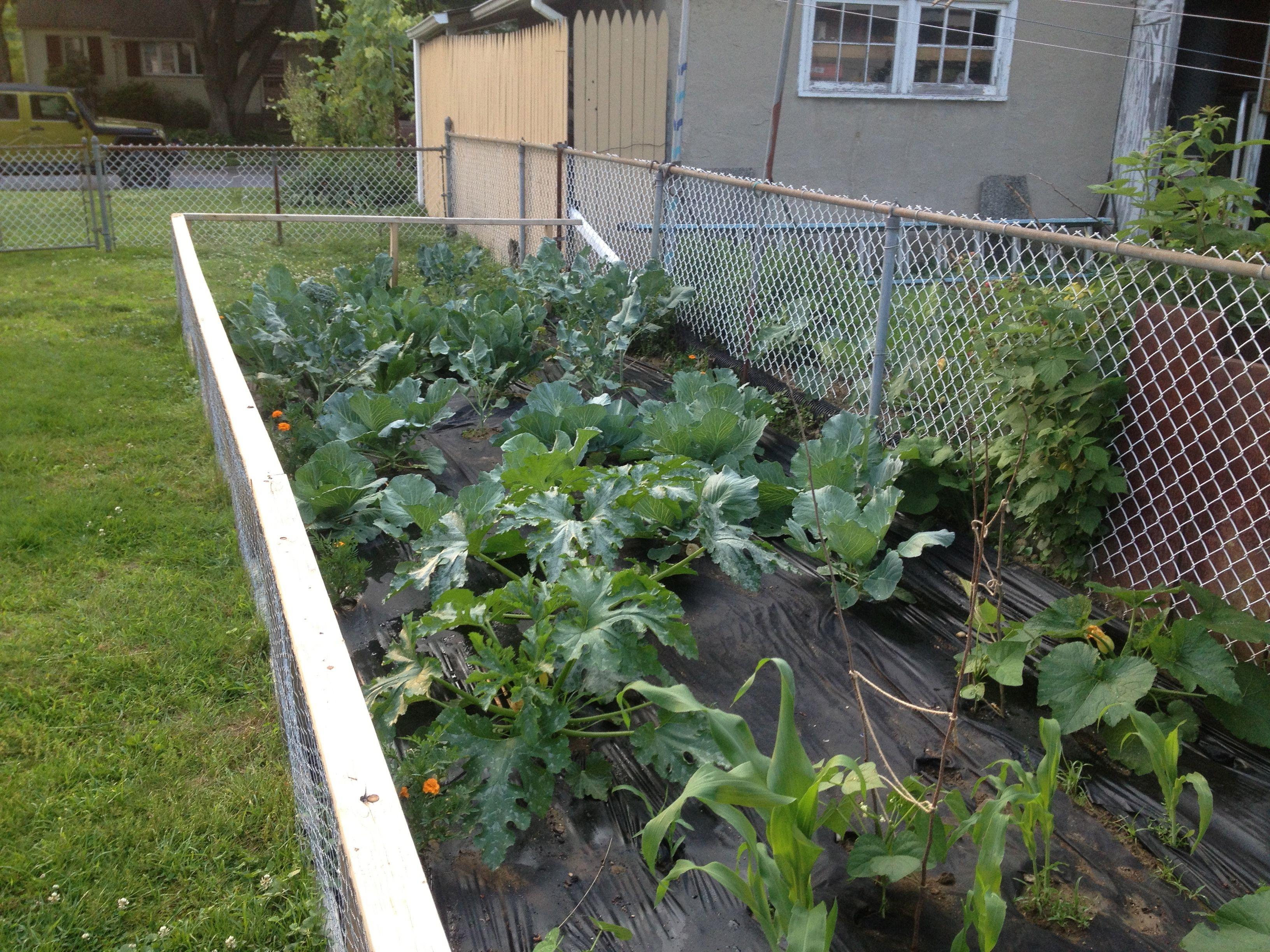 June veggie garden OUR VEGIE GARDENS Pinterest