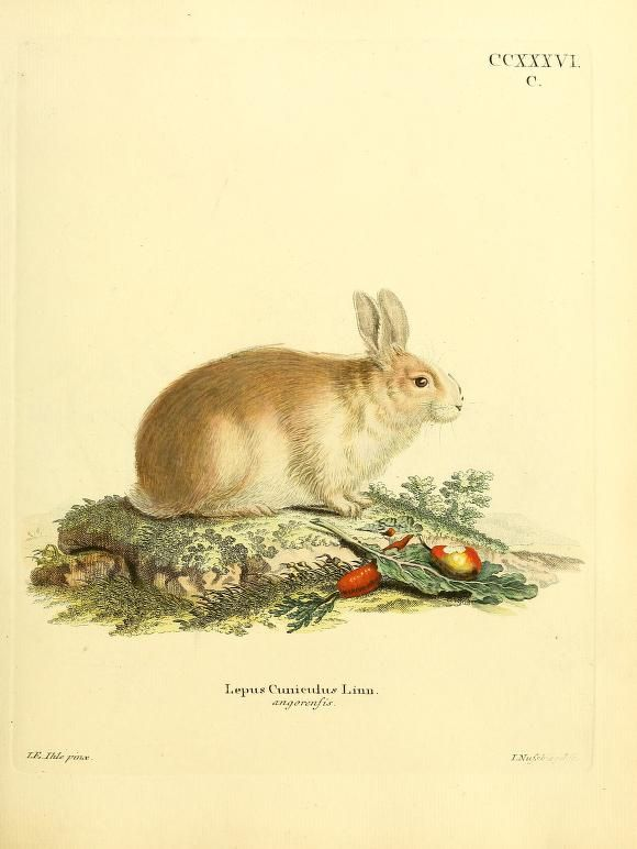 plates 166-280 - Die Säugthiere in Abbildungen nach der Natur, mit Beschreibungen / - Biodiversity Heritage Library