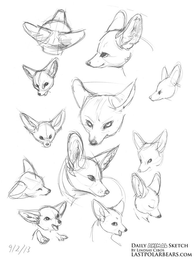Daily_Animal_Sketch_172 | dasenho | Pinterest | Sketches, Animal and ...