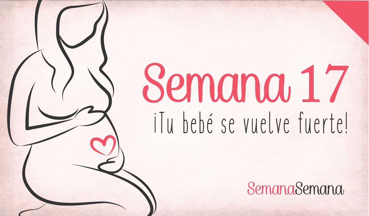 Semana 17 de embarazo embarazo desarrollo bebé consejos embarazo ...