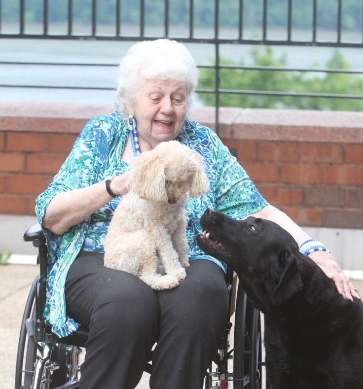We Know Pets Rock But What They Can Do For Seniors Is Amazing Pets Rock Pets Older Adults
