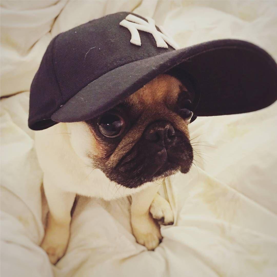 Pug Life Pug Pugs Puppy Dog Dogs Puglife Hat Ny F4f