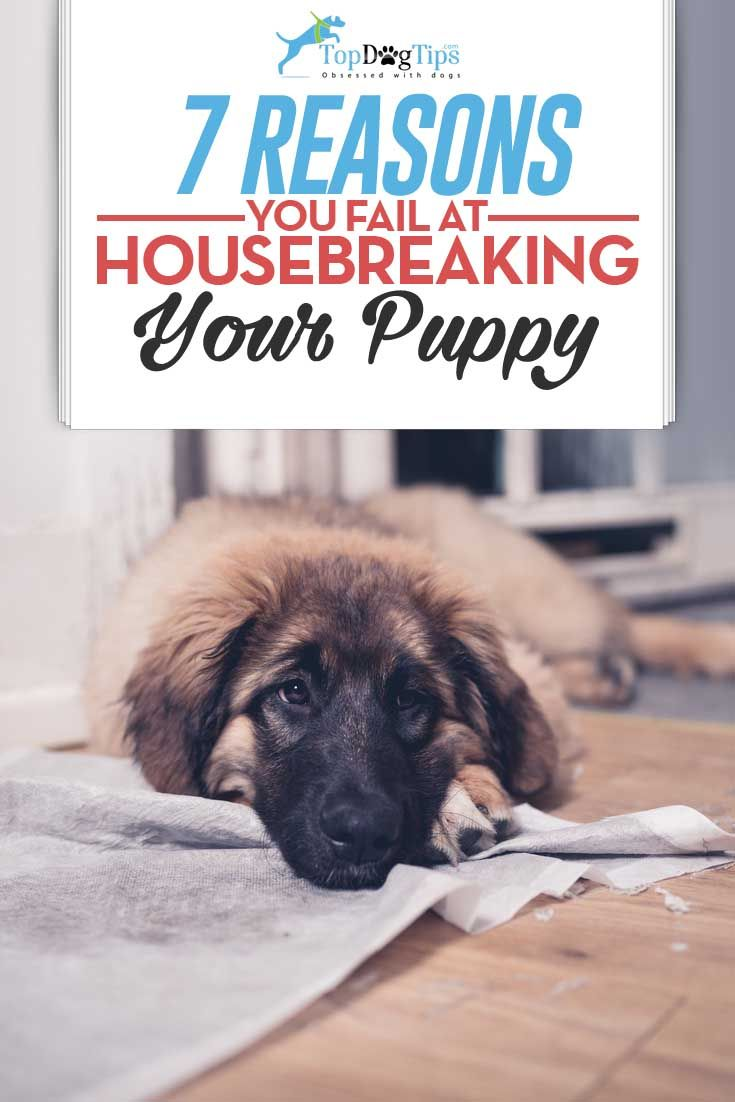7 Reasons You Re Failing At Housebreaking Your Puppy And How To