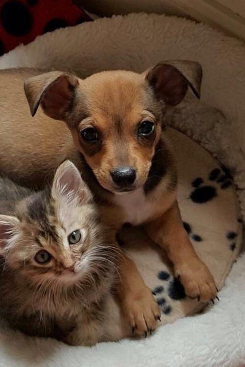 Картинки котята и щенки смешные и милые обманщицы