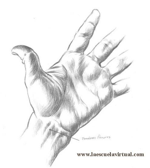 Como Dibujar Manos Tutorial Gratis Curso Online How To Draw Hands