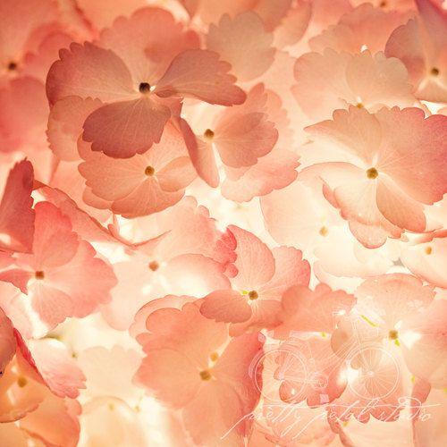 Floral Fine Art Photograph Pink Hydrangea by PrettyPetalStudio, $30.00 #fpoe