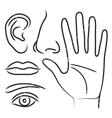 Sensory Organs Hand Nose Ear Mouth And Eye Vector 1428774 By Nikolae On Vectorstock Eye Vector Vector Eyes Mouth Clipart Black And White