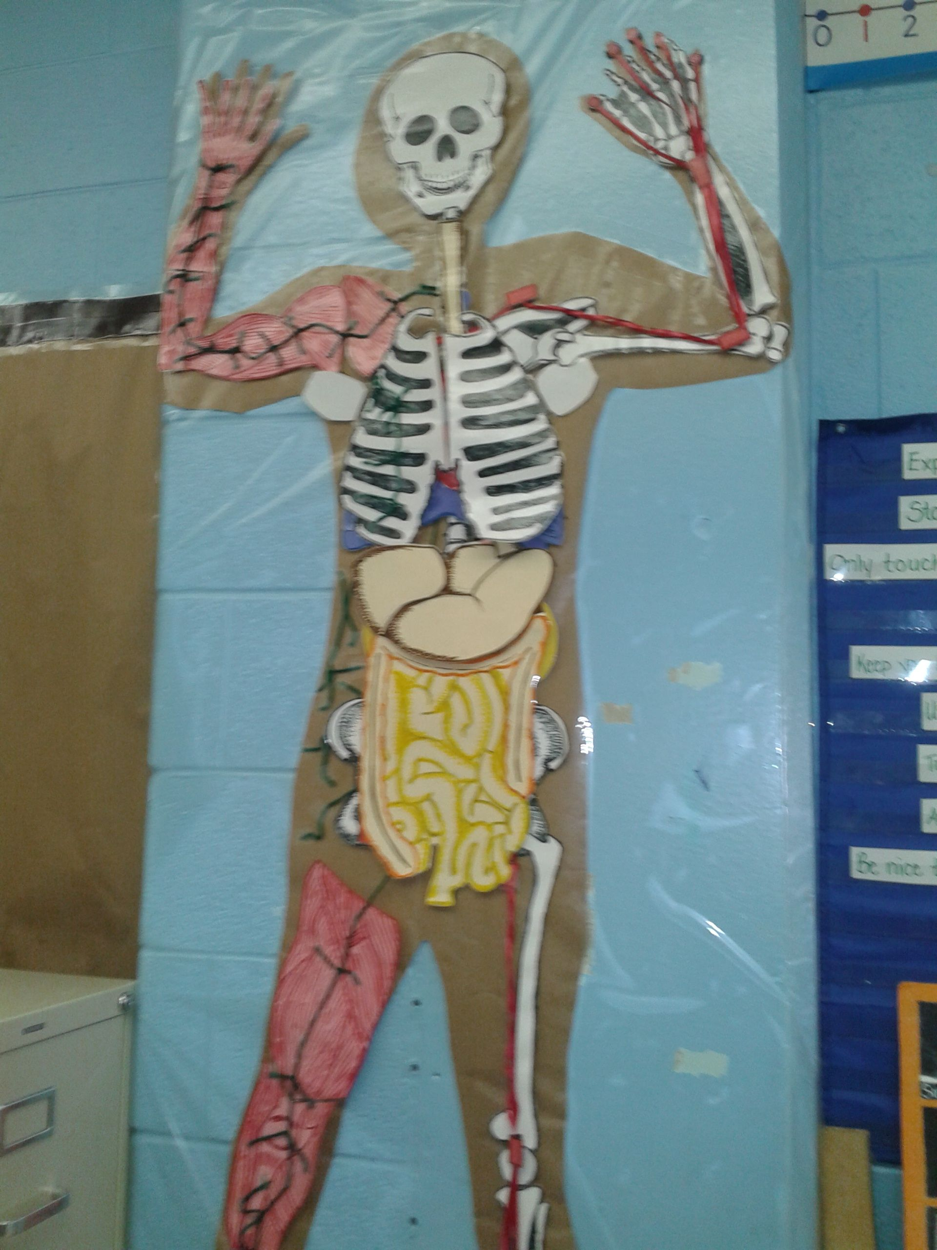 Human Body Interactive Wall Display Traced Student On Paper Body
