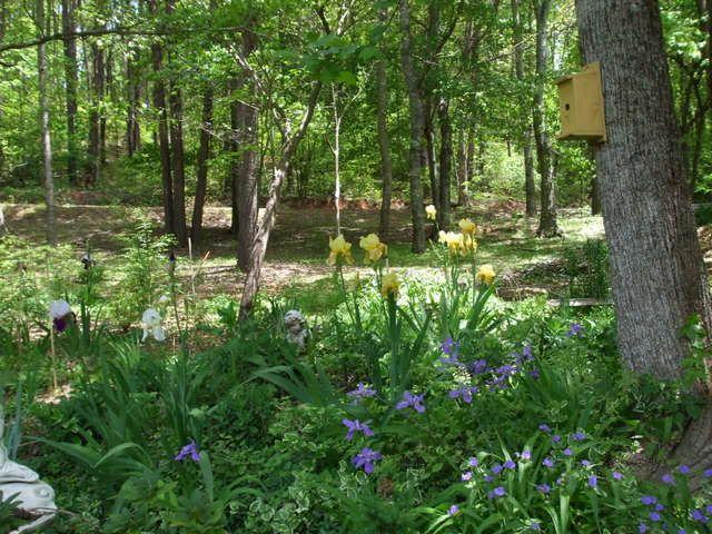 Woodland Small Garden Designs on small greenhouse designs, private garden designs, meditation garden designs, shade garden designs, small rock garden ideas,