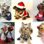 Photo of Patrones de ropa para mascotas – Patrones gratis