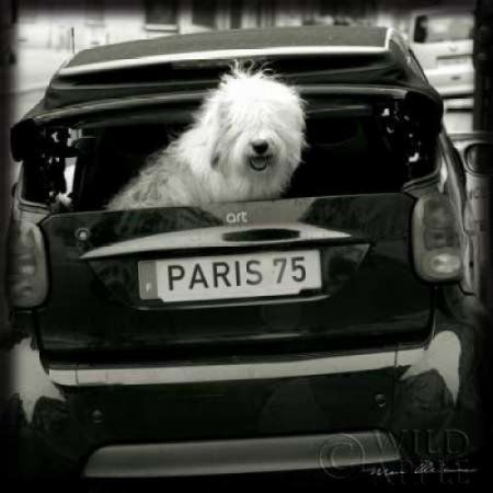 Paris Dog I Canvas Art - Marc Olivier (24 x 24)