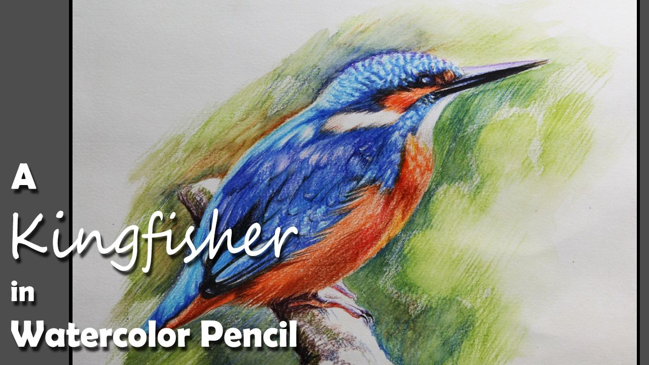 How To Paint A Kingfisher In Watercolor Pencil Youtube