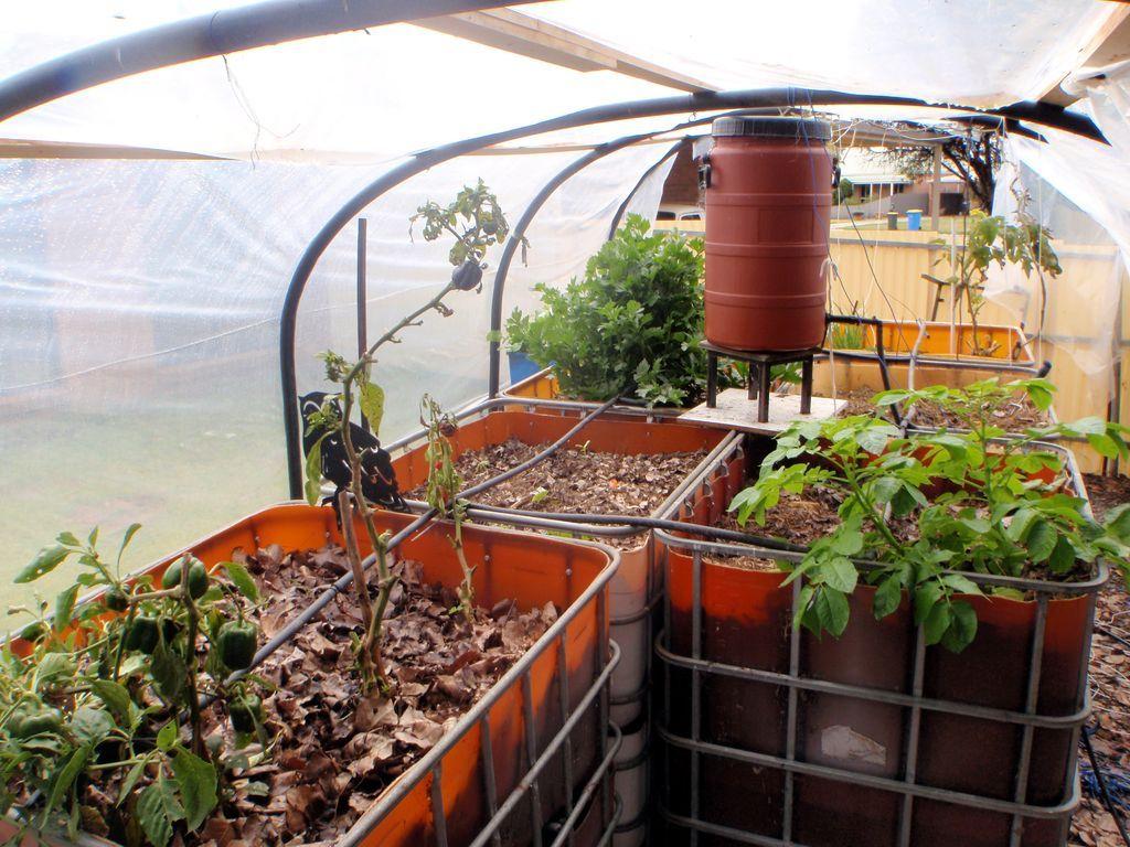 vermiponic garden food garden