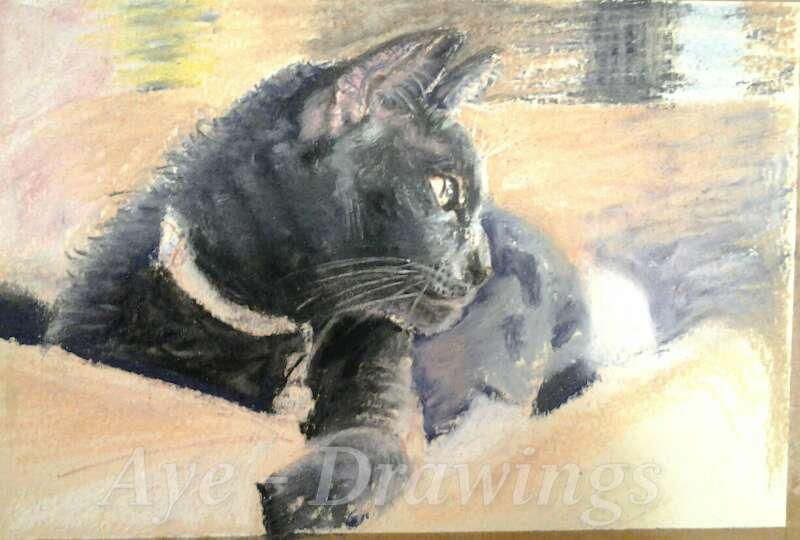 My friends 's cat ,  his name is Silvermist. to me he looks like a female cat. My soft pastel painting on paper. http://www.facebook.com/time4drawing